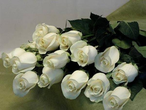 белые розы в знак благодарности