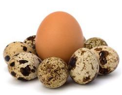 Яйца для зубов
