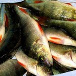 рыба как продукт питания